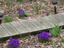 Spring in my back yard